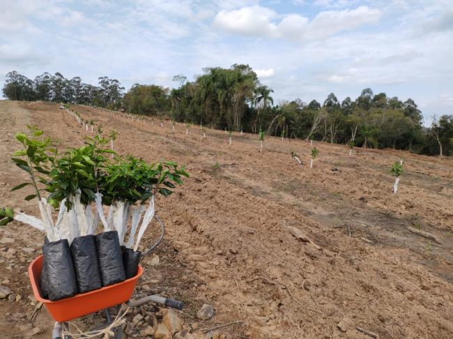 Incentivos à fruticultura geram resultados
