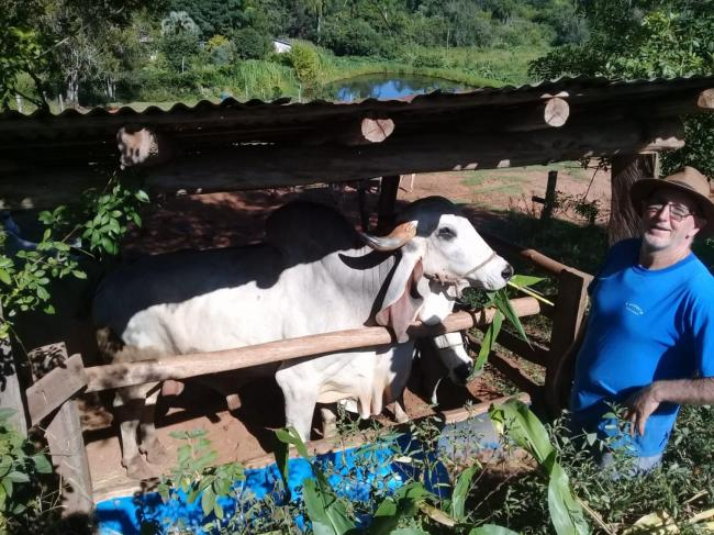 Município vacina 16 novilhas contra brucelose bovin