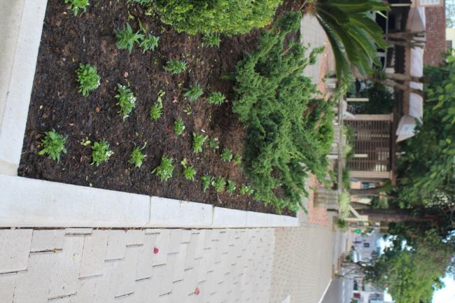 Prefeitura planta mais de três mil mudas de flores