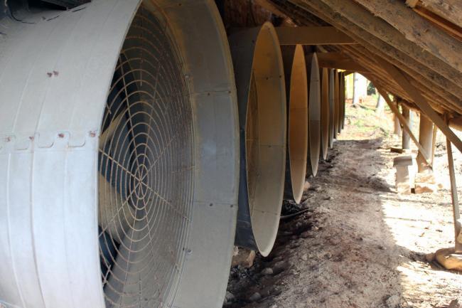 Produção primária de Harmonia inova e aposta em energia solar