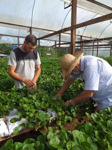 Emater realiza visita para produtores de hortaliças e morango
