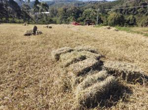 650 fardos de feno são produzidos na Vila Floresta